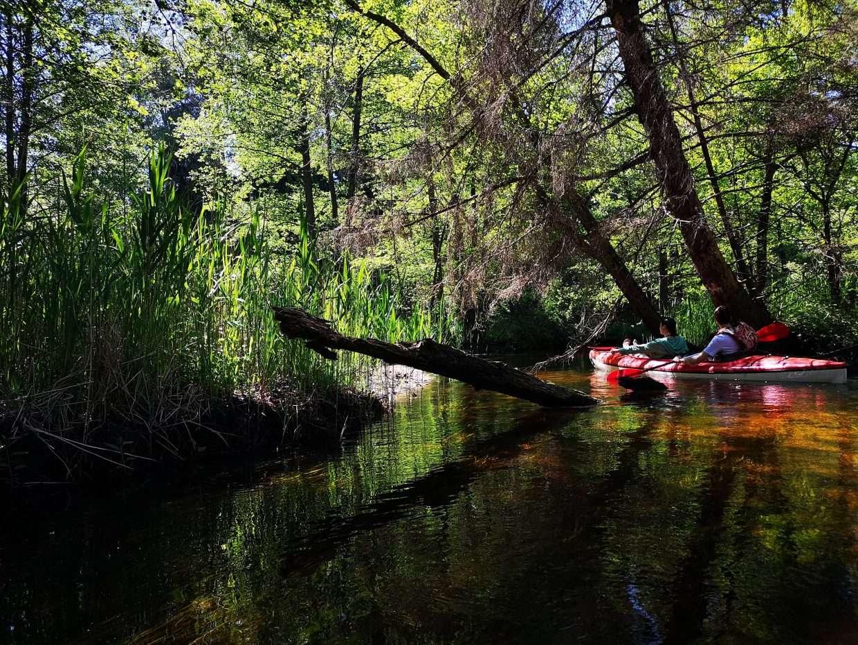 TOP 5 gražiausios upės plaukimui baidarėmis šalia Vilniaus | Būka